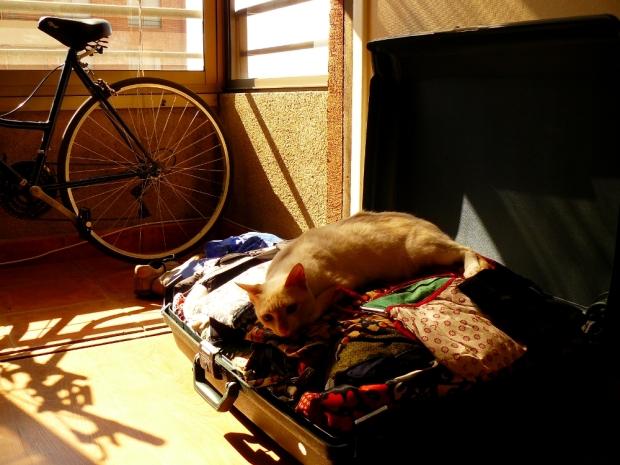 Lili en las maletas